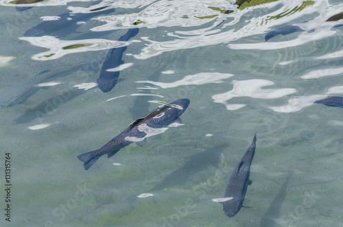 Fische im teich stockfotos und lizenzfreie bilder auf for Welche fische in teich