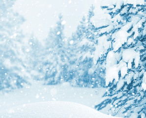 Winter bright landscape. Winter background with snow-covered pine forest and snowstorm.
