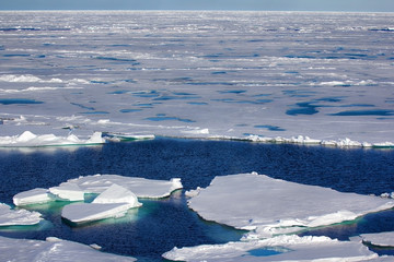North pole 2016. The ice and openings on 84-88 parallel