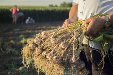 A bundle of garlic.