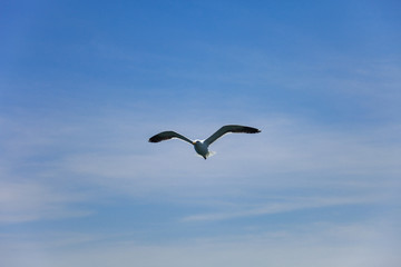 seagulls flying high in the blue air, waving their wings over th