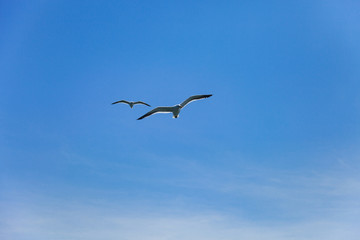 two seagulls flying high in the blue air, waving their wings ove