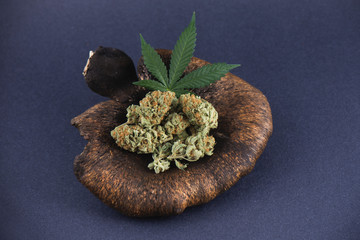 Detail of cannabis buds arrangement (mango puff strain) with pot