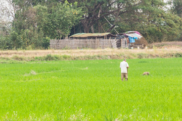 Farmer with rice field in Thailand