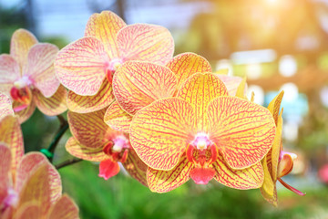 Orchid flower and green leaves background with sunlight in garden. Orchid is considered the queen of flower in Thailand.