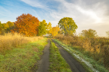 autumn morning, a wonderful, vibrant colors of the leaves