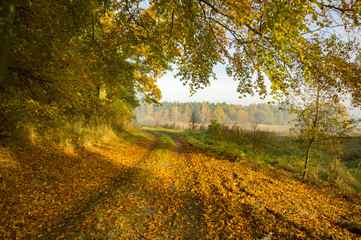 autumn morning, a wonderful, vibrant colors of the leaves on the