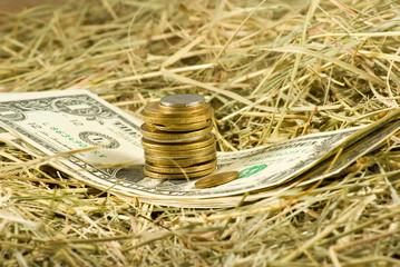 Image of dollars money on hay closeup
