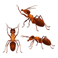 Set of ants with two antennas and six legs in different poses. Vector