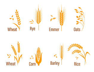 Cereals icon set.