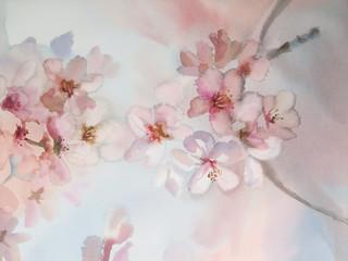 sakura flower watercolor