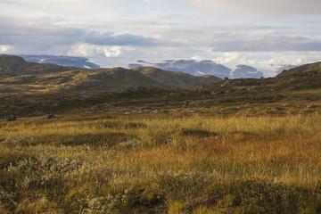 Brown tundra landscape on Hardangervidda plateau against glacier, Norway