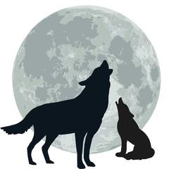 lupi che ululano