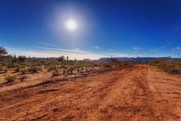Dirt road through Arizona desert just outside Scottsdale Wall mural