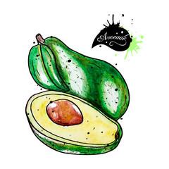 Avocado watercolor on white background