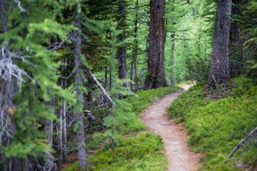 Fototapeta Numa Creek Trail obraz