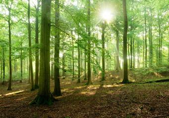 Sonnenstrahlen im naturnahen Buchenwald, Stubnitz, Nationalpark Jasmund, Insel Rügen, Mecklenburg-Vorpommern, Deutschland