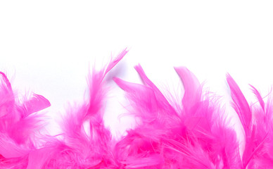 pink feather border