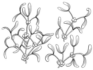 Mistletoe graphic black white isolated sketch illustration vector