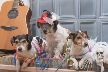 Ready for the party - three Jack Russell dogs