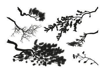 The branches of trees. Black silhouette on a white background. D