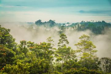 Fog in Will-will