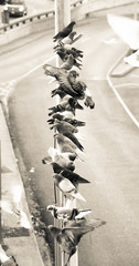 Doves in urban scene photograph