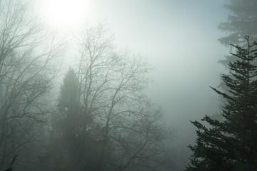 Mystische Nebelstimmung im Wald