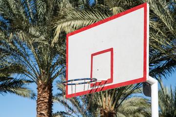 basketball backboard in the palms
