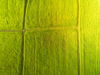 Rice field and green grass in Thailand