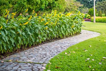 Walkway in garden close-up sunflower in field.