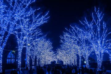 冬の公園 青いイルミネーション