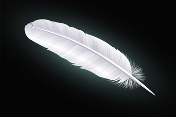 White feather on a black background. Vector
