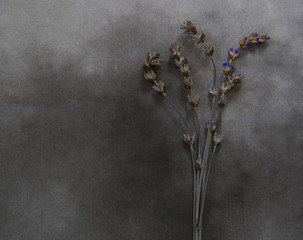 Dry lavender on marble - deepest sympathy