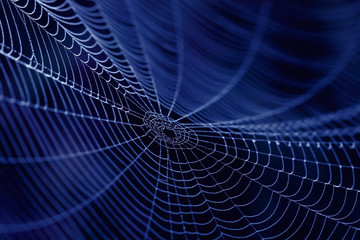 Spider Web as concept  of the Internet