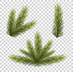 Spruce branch with cones. Vector illustration, isolated on transparent background. vector