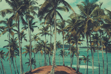 Palm trees on tropical coast, view above the ocean, vintage toned and retro color stylized