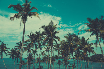 Palm trees on a hill at tropical beach, vintage toned and retro color stylized