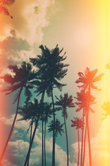 Coconut palm trees on tropical ocean beach, vintage toned and retro color stylized with film like light red and yellow leaks