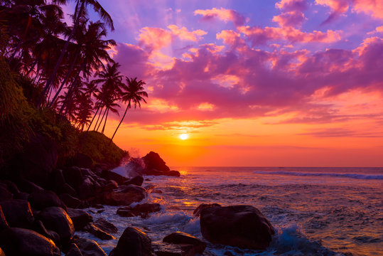 Palm tress on tropical coast at sunset