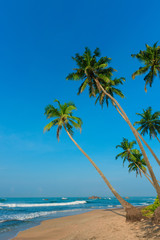 Tropical palm trees on ocean beach at day light time