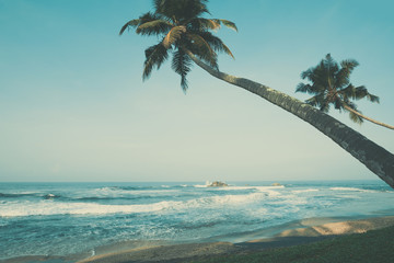 Tropical beach with palm trees, retro color stylized