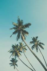 Palm trees vintage color stylized