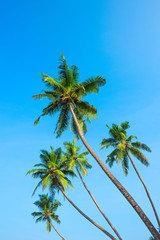 Tropical palm trees over blue sky background