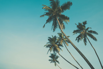 Palm trees vintage color stylized with copy space