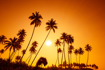 Palm trees silhouettes on tropical beach at summer warm vivid sunset time