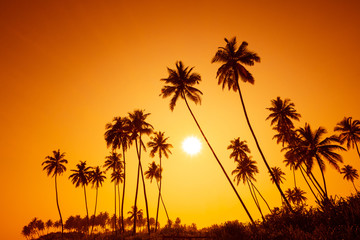 Palm trees silhouettes on tropical beach at summer warm vivid sunset time with sun and rays