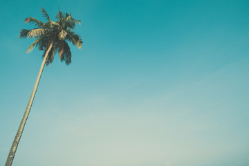 Palm tree with blue sky and copy space, vintage color stylized