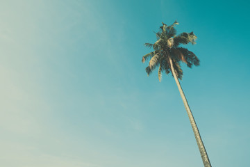 Palm tree with sky background vintage color stylized with copy space