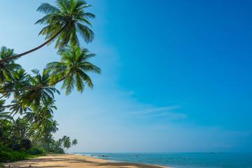 Tropical coconut palm trees on island beach with  blue sky